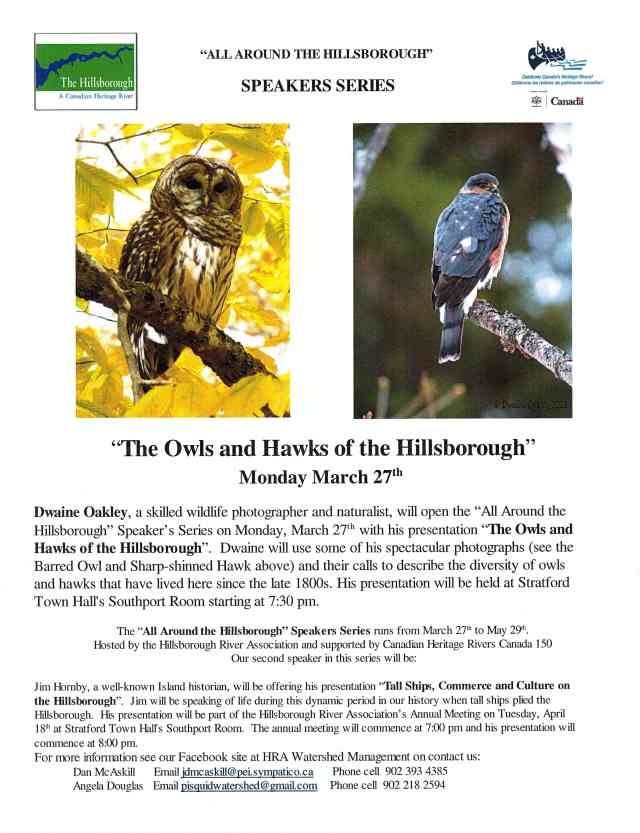 Poster Owls and Hawks of the Hillsborough 2017 s