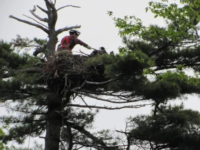 person-in-eagles-nest-on-p-e-i[1]