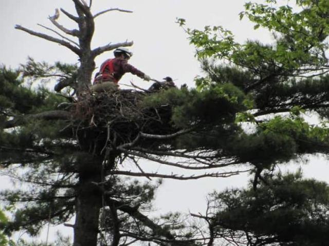 person-in-eagles-nest-on-p-e-i[1]
