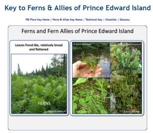 Ferns&Allies